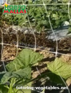 vertical support system on plants crops